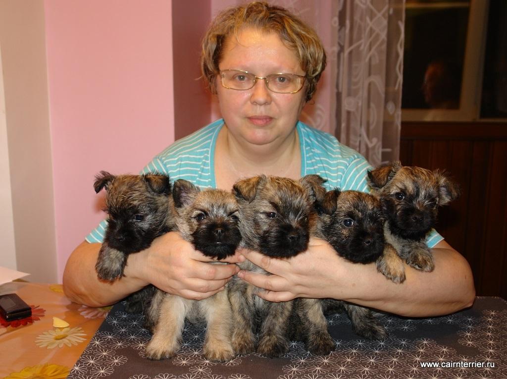 Фото владельца питомника Еливс с рыжими щенками на руках