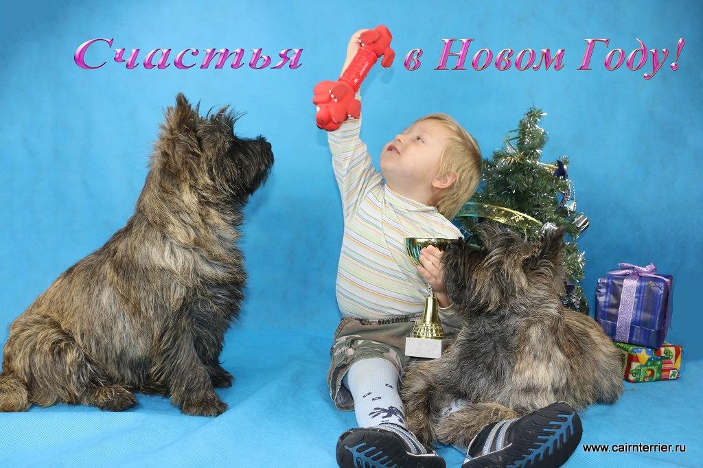 Фото керн терьеры питомника Еливс играют с маленьким ребёнком