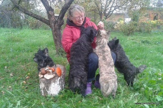 Cairn Terrier channel YouTube elivs (2)