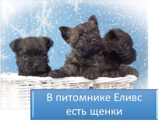 В питомнике Еливс есть щенки