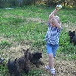 Керн терьер и дети