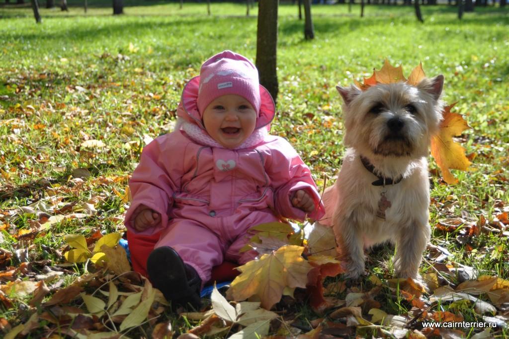 Фото Керн терьера с маленьким ребёнком на прогулке.