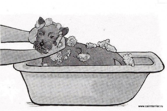 К мытью щенка приучают с раннего возраста