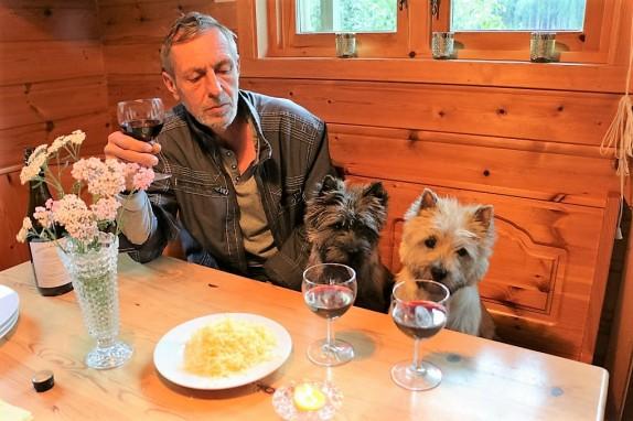 Фото Керн терьеры сидят за столом вместе с владельцем