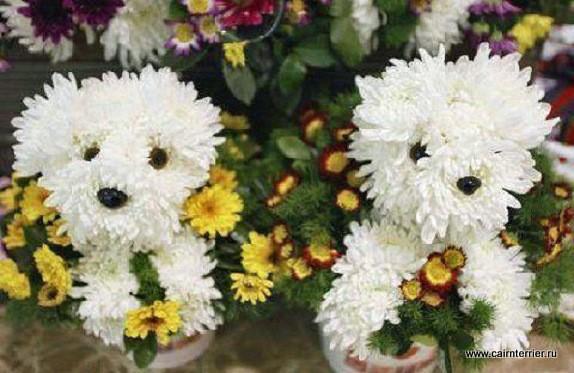 Фото цветы оформленные в образе собак