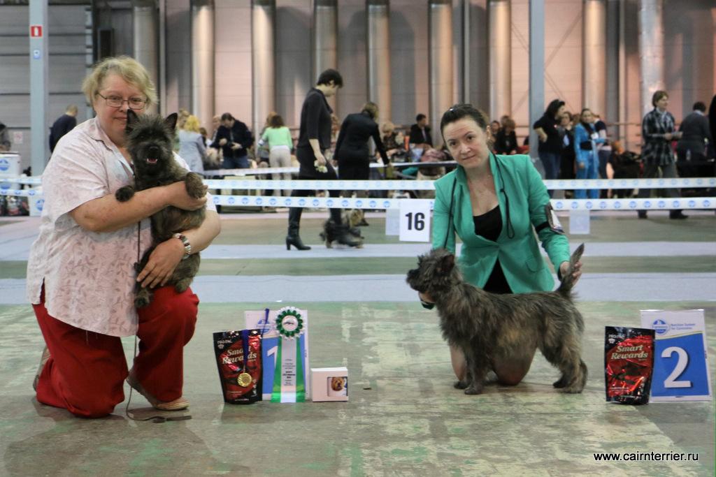 Фото керн терьеров и владельцев в ринге на призовых местах выставки.