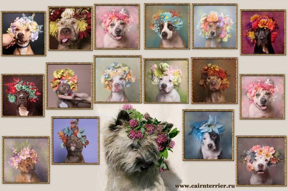Фото керн терьера в венке из цветов на фоне портретов терьеров в венках из цветов