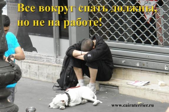 Фото собака просит милостыню вместе с человеком на улице