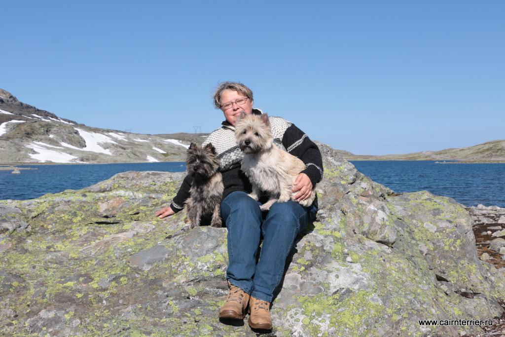 Фото керн терьеров питомника Еливс с заводчиком во время прогулки на скале в Норвегии.