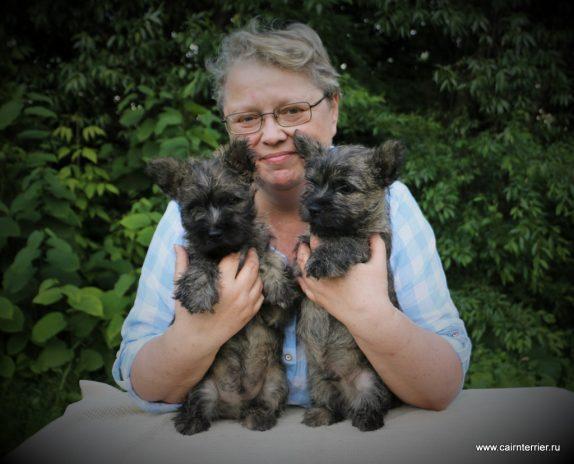 Фото тигровых щенков керн терьера питомника Еливс у владельца Елены Сорокиной на руках