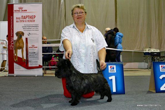 Cairn Terrier Tuileies Iz Doms Eliv's