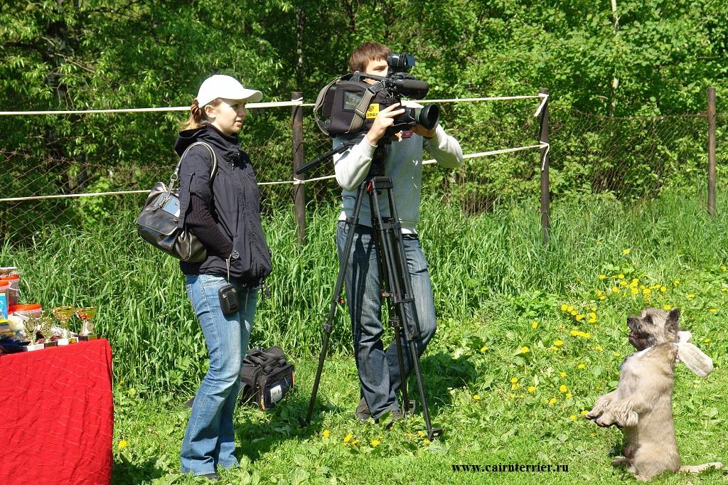 Фото керн терьера питомника Еливс на съёмке информационной телевизионной программы