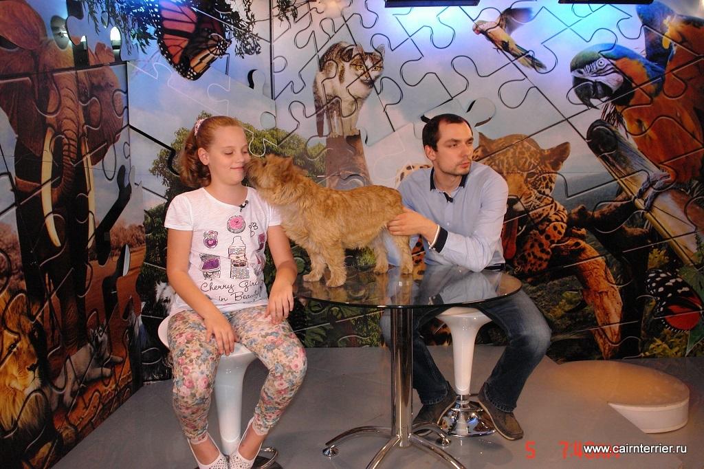 ТВ программа с участием Керн терьера питомника Еливс