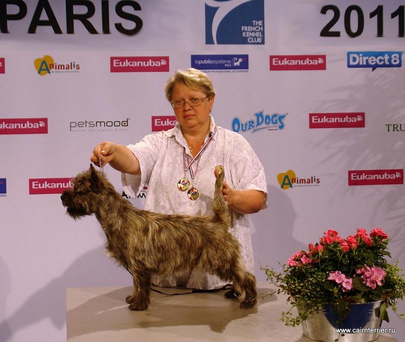 Керн терьер Понтус - Лучший Юниор Франции 2011.