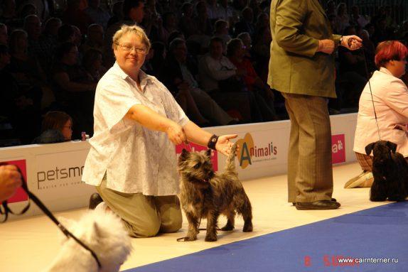 Керн терьер ROTTRIVER'S DANCING ON MY OWN ( Понтус)- Лучший Юниор Франции 2011