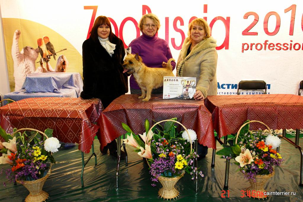 Владелец питомника Елена Сорокина на конкурсе грумеров с керн терьером.