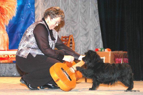 Керн терьер Бьюти питомника ЕливС играет на гитаре