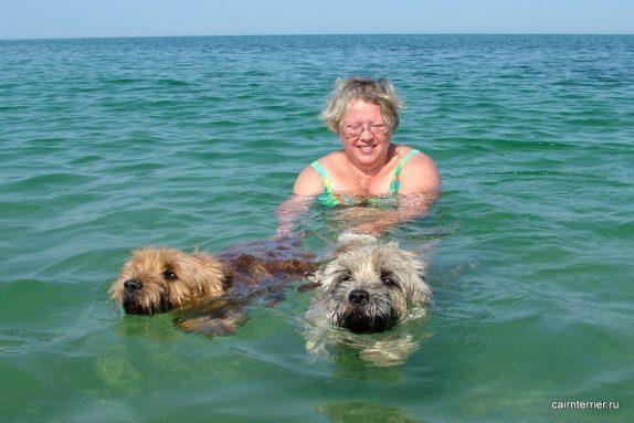 Керн терьеры Янош и Чиж плавают в море.
