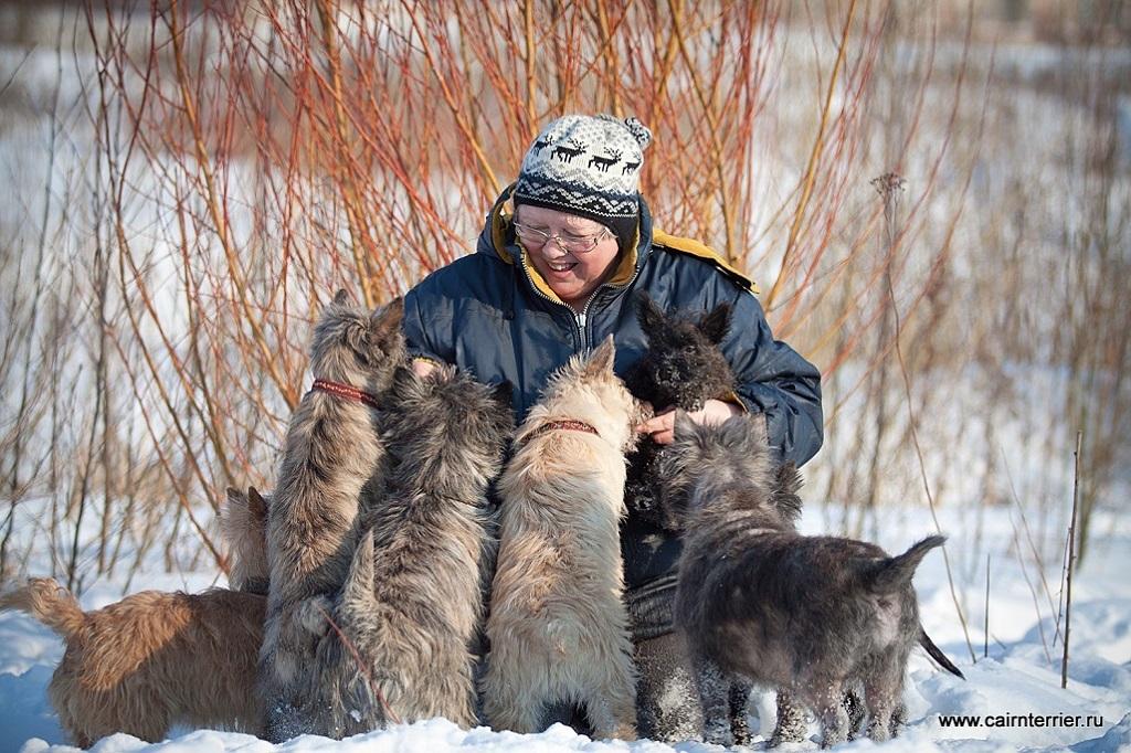 Фото керн терьеров с владельцем питомника Еливс на прогулке зимой