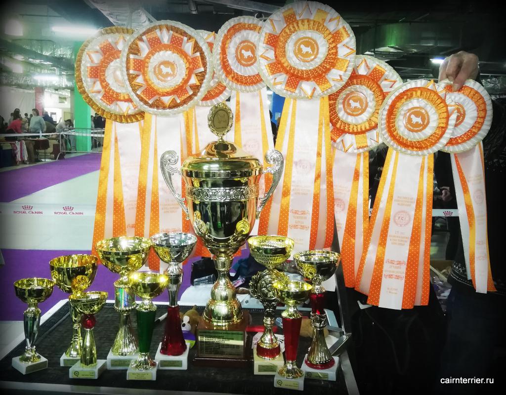 Награды питомника Еливс на выставке национальный чемпионат