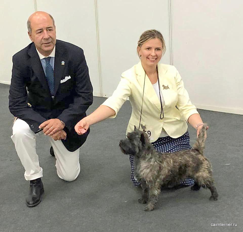 Керн терьер из дома Еливс с хендлером и экспертом на призовом месте выставки