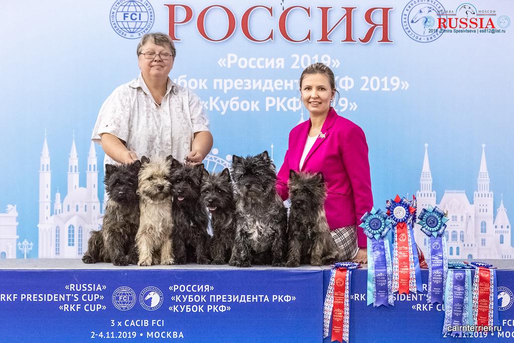 Керн терьеры питомника Еливс с хендлером и владельцем Еленой Сорокиной на выставке Россия 2019