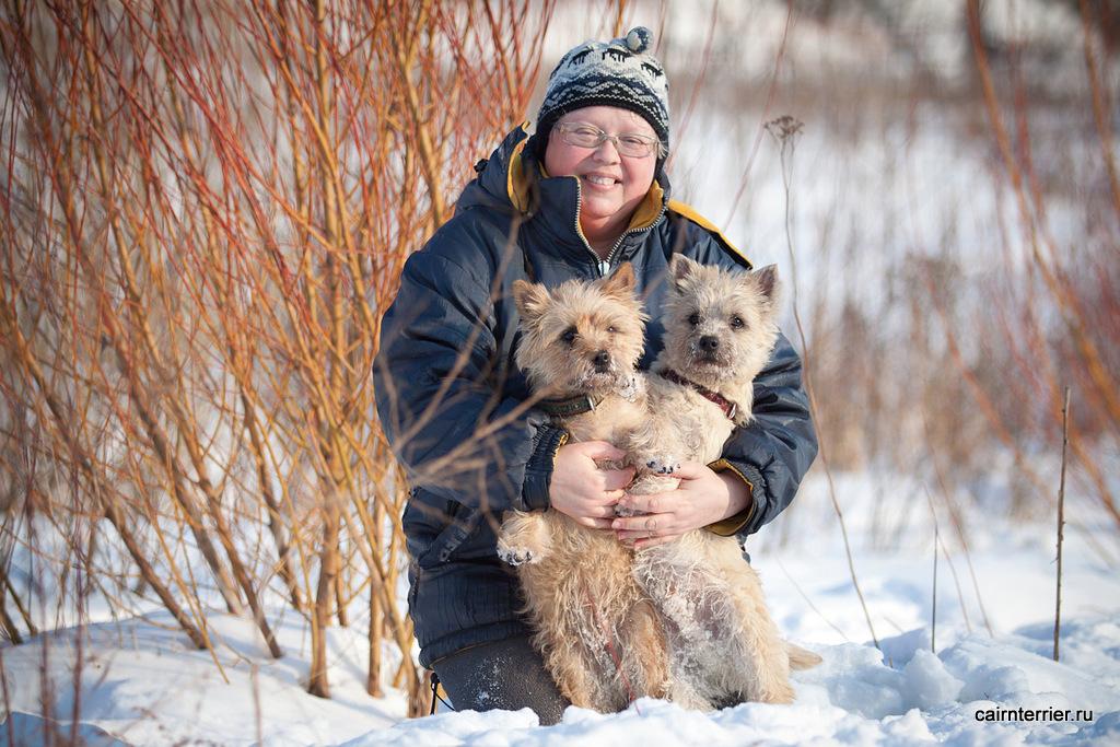 Фото рыжего и пшеничного керн терьеров с владельцем питомника Еливс на прогулке зимой в парке