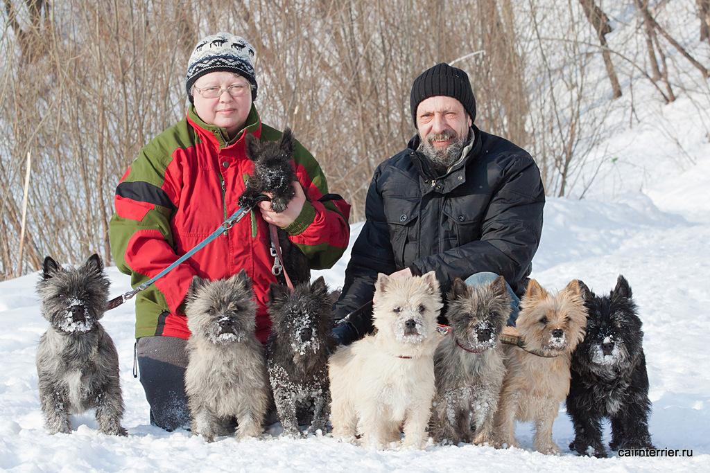 Фото керн терьеров питомника Еливс с владельцами на прогулке зимой в парке