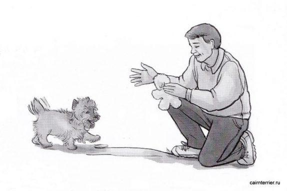 Рисунок щенка керн терьера с дрессировщиком, выполняющего команду «Ко мне»